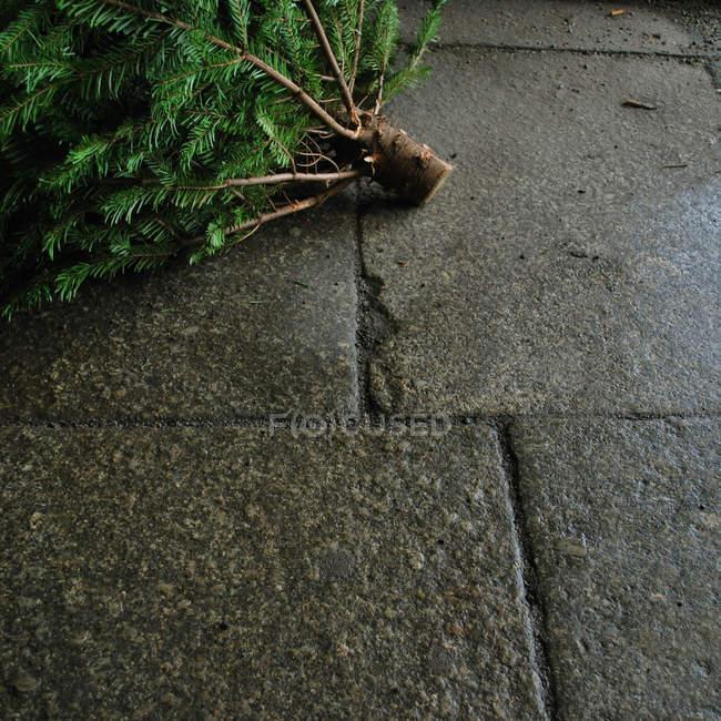 Cropped image of discarded christmas tree lying on wet sidewalk road — Stock Photo