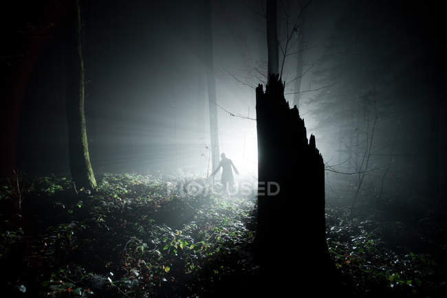 Night in forest with tree stump and walking silhouette of person at light - foto de stock
