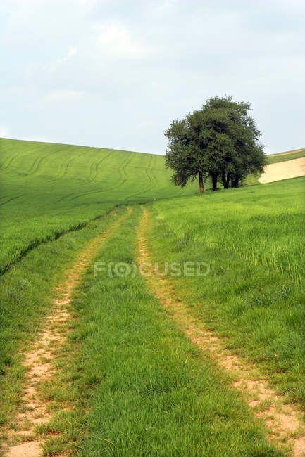 Green grass meadow landscape with path and trees — Stock Photo