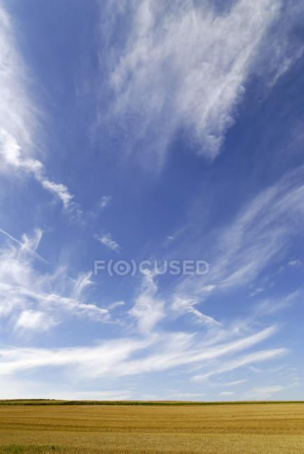 Gelbes Feld und blauer Himmel — Stockfoto