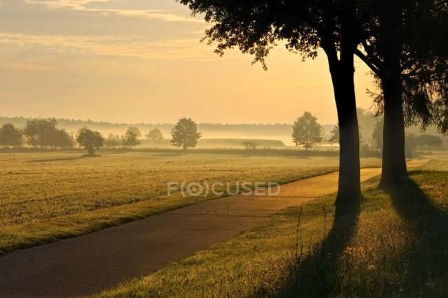 Campo pascolo nella nebbia dell'alba — Foto stock