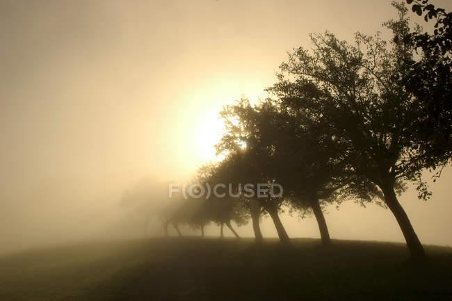 Pasture field in sunrise fog with trees silhouettes — Stock Photo