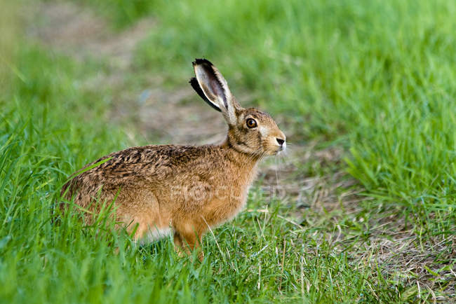 Rabbit, hare on green grass — стоковое фото