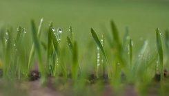 Просмотр макроса воды падает на зеленый лезвия травы — стоковое фото