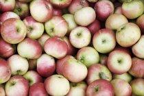 Haufen von roten und gelben Äpfeln, close-up — Stockfoto