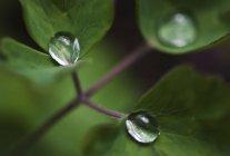 Просмотр макроса воды падает на зеленые листья — стоковое фото