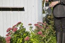 Жінка розливу квітучих рослин з сірими поливу банку — стокове фото