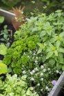 Vista di alto angolo di piante che crescono in cassa presso Orto — Foto stock