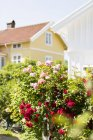 Blossoming rose bushes outside mansion — Stock Photo