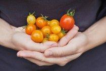 Купи стиглих помідорів чоловічої руки, Закри — стокове фото