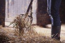 Міделю фермер лопатою сіна в сарай — стокове фото