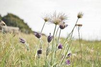 Зменшеному вигляді Дикі квіти квітучі в галузі — стокове фото