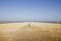 Haystacks on field under clear blue sky — Stock Photo