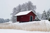 Red wooden cottage and reeds on lake shore — Stock Photo