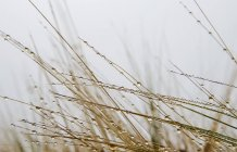 Просмотр макроса воды падает на сухой травы — стоковое фото