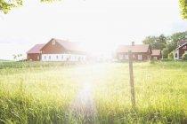 Спокійній зору зелені поля і будинок на яскравому сонячному світлі — стокове фото