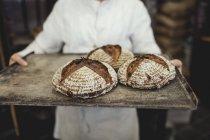 Tronco del panettiere che tiene il pane appena sfornato nel vassoio al forno — Foto stock