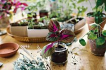 Planta no frasco na tabela em casa — Fotografia de Stock