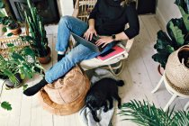 Low section of woman using laptop by pug in room at home — Stock Photo