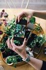 Mãos cortadas da mulher que fotografa plantas na tabela em casa — Fotografia de Stock