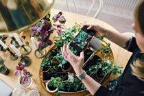 Opinião de ângulo elevado as plantas fotografando da mulher na tabela em casa — Fotografia de Stock