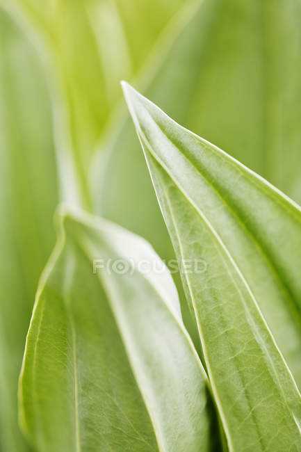 Close-up of flower green leaves at sunny day — Stock Photo