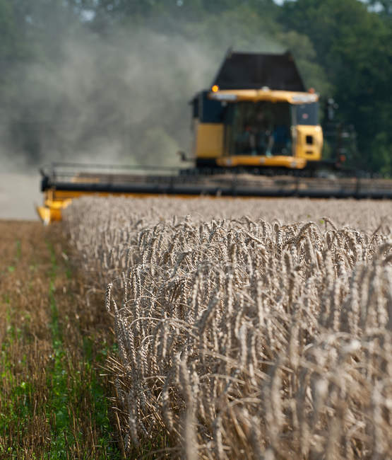 View of combine harvesting wheat and wheat in foreground — Stock Photo