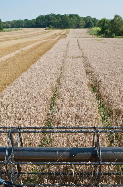 Vista do campo de trigo da colheitadeira — Fotografia de Stock