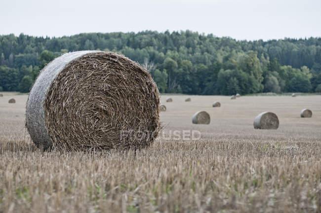 Enroulé de balles de foin sur terrain agricole — Photo de stock