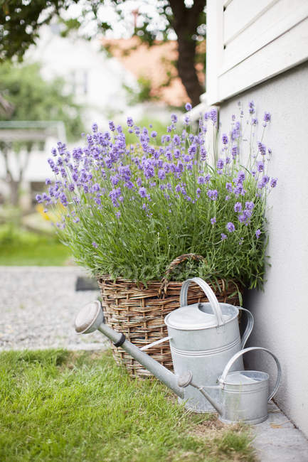 Watering cans on near wicker pots with plants outdoors — Stock Photo
