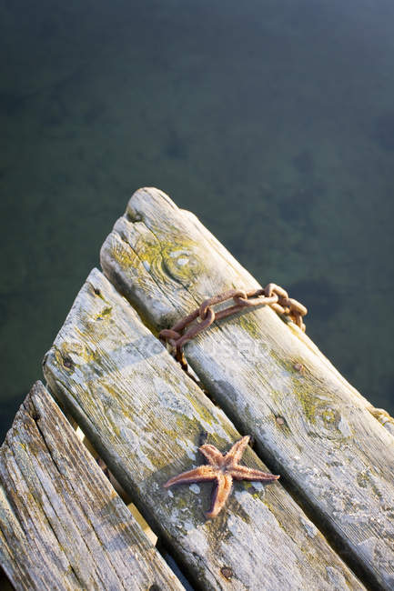 High angle view of starfish on boards with rusted chain — Stock Photo