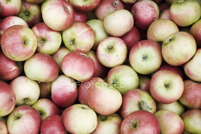 Pile of red and yellow apples, close-up — Stock Photo