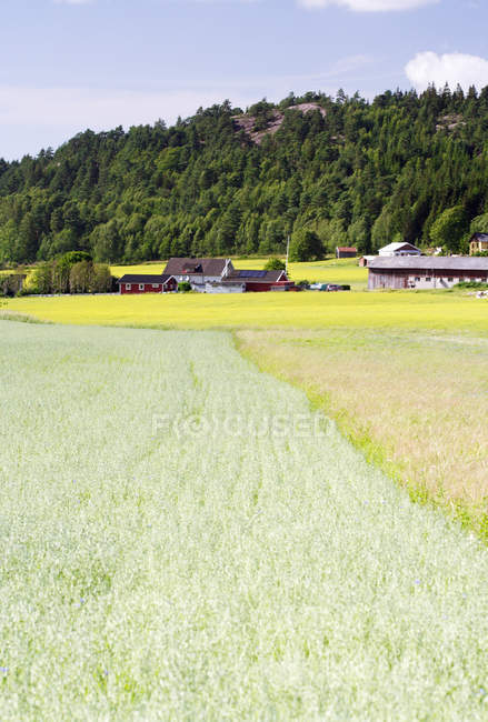 Colorful fields and Farmland with barns in background — Stock Photo