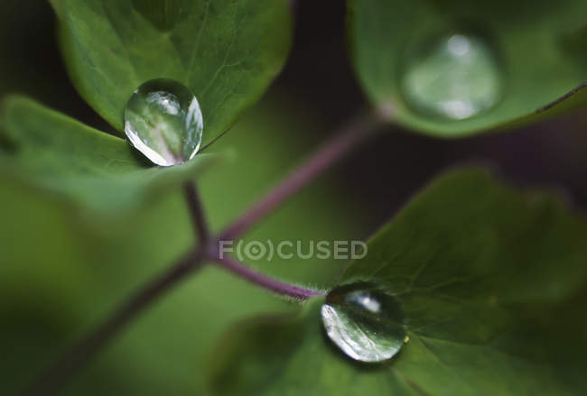 Macro view of water drops on green leaves — Stock Photo