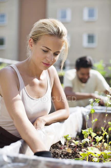 Young woman gardening at urban garden with man in the background — Stock Photo