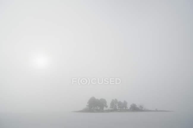 Idyllic view of trees in foggy landscape - foto de stock
