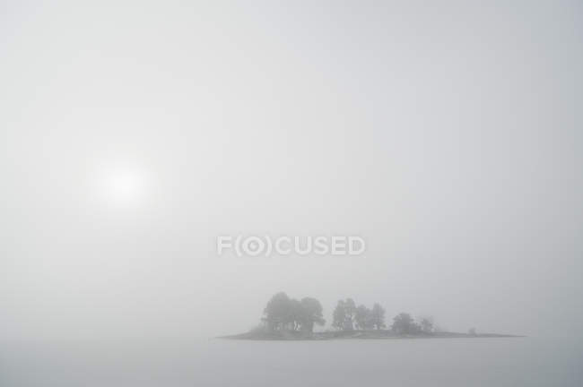 Idyllic view of trees in foggy landscape — Stock Photo