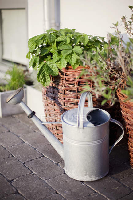 Watering can on near wicker pots with plants outdoors — Stock Photo