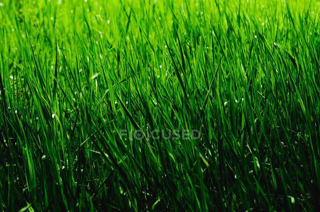 Vue rapprochée de l'eau tombe sur les feuilles vertes — Photo de stock