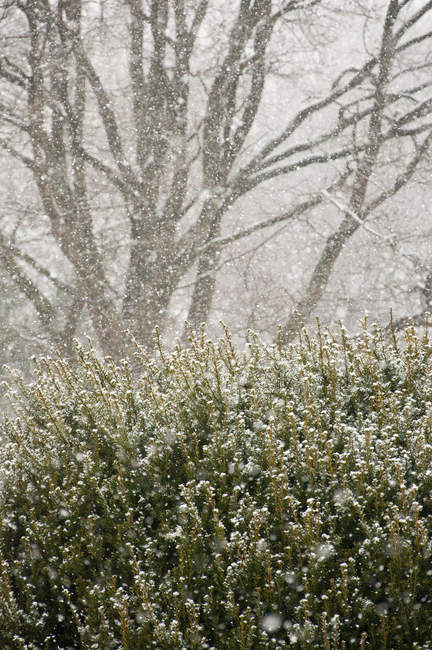 Park bushes and trees in snow storm — Stock Photo