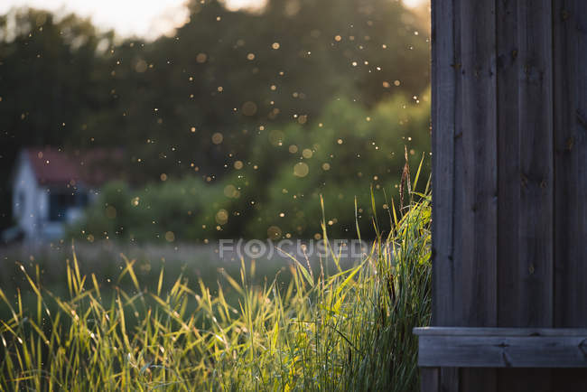 Grass growing by cabin during rainy season — стоковое фото