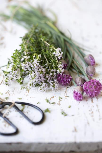Тимьян и луковым травы цветы на белом столе — стоковое фото