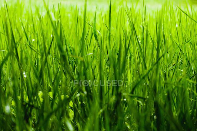 Крупным планом вид пышных зеленых листьев — стоковое фото