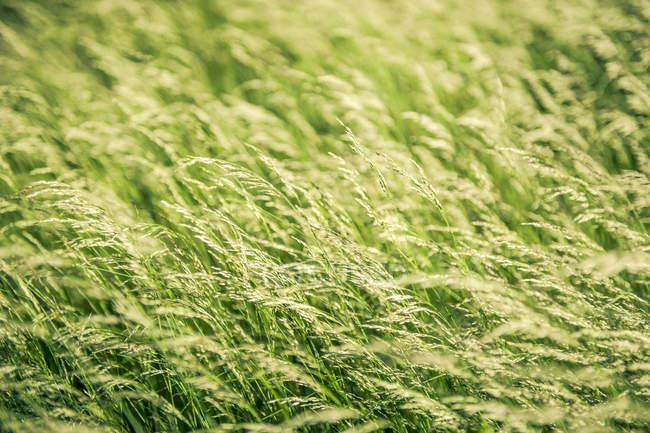 Полный кадр выстрел из свежей травы — стоковое фото