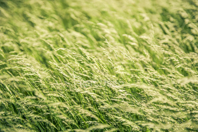 Full frame shot of fresh grass — Stock Photo
