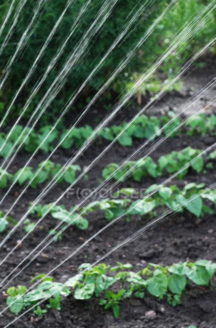 Close-up of water spray watering green beds — Stock Photo