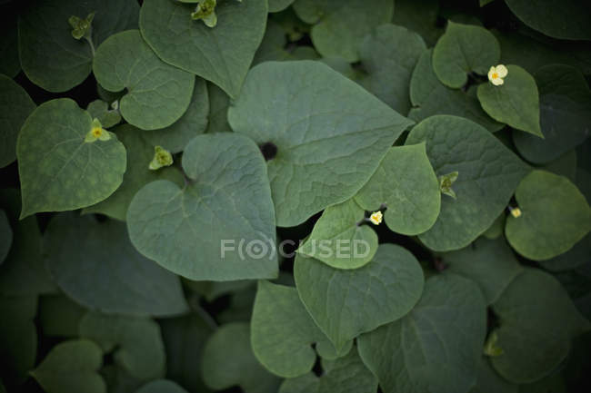 High angle view of Green leaves and yellow flowers — Stock Photo