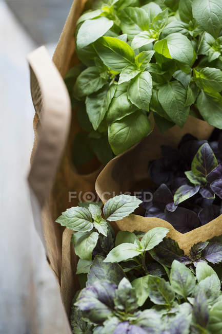 High angle view of plants in paper bags — Stock Photo