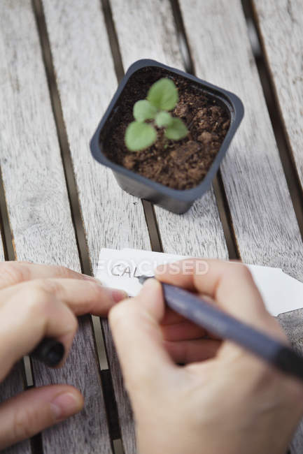 Mann schreibt Pflanzennamen auf Preisschild — Stockfoto