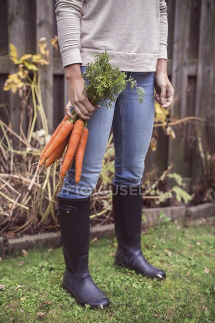 Sección baja de mujer recién cosecha zanahorias en la granja orgánica - foto de stock